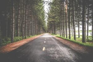 Road-Through-Forest-e1436676465483